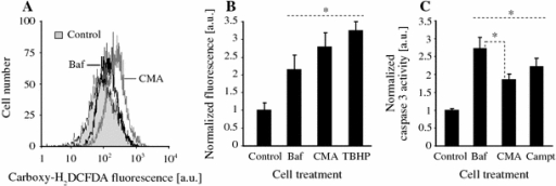 The effect of Baf on generation of ROS and apoptosis of dPC12 cells. a FACS analysis of ROS-sensitive carboxy-H2DCFDA probe fluorescence reveal an increase in ROS levels in the cells treated with Baf and CMA (both 0.25 μM) for 2 h. b Quantitative analysis of data presented in a as compared to the effect of classical ROS inducer tert-butyl hydroperoxide (TBHP, 250 μM). c Caspase-3 activity was increased in the cells treated with both V-ATPase inhibitors for 4 h; however, the effect of Baf was significantly stronger. Asterisks significant differences