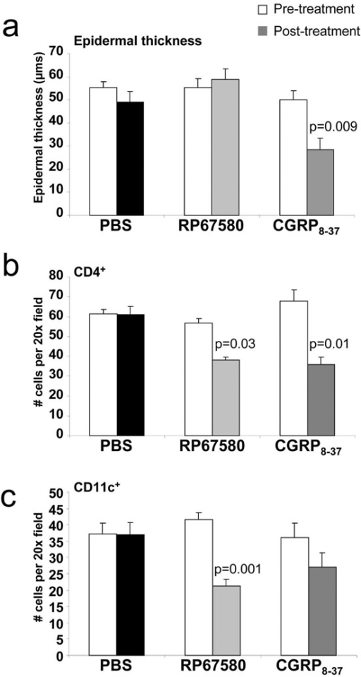 Inhibition of SP or CGRP activity under innervated conditions mimics denervated-mediated changes to acanthosis and CD11c+ and CD4+ cell numbers in a neuropeptide specific mannerEpidermal thickness (a), CD4+ cell number (b), and CD11c+ T cell number data (c) are presented for cohorts of animals (n=4–6 per group) prior to (pre-treatment) and after (post-treatment) 30 days of treatment with either PBS, the selective SP receptor NK-1R antagonist (RP67580), or the CGRP antagonist, CGRP8–37. p values are as indicated.