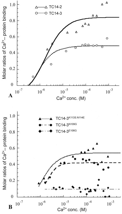 Calcium-binding kinetics of wild-type and mutant TC14s. (A)Wild type TC14-2 and TC14-3. Note that the Ca2+-binding affinity of TC14-3 is lower than that of TC14-2. (B)TC14-3E106G, TC14-3N109G, and TC14-3K113S.N114E. TC14-3N109G showed lower Ca2+-binding affinity than wild-type TC14-3 and TC14-3K113S.N114G showed the higher affinity to some extent.