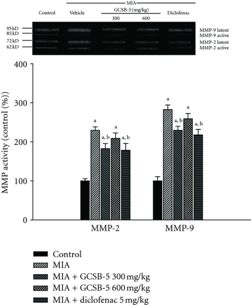 Activities of MMP-2 (Gelatinase A) and MMP-9 (Gelatinase B) assessed by zymography in knee joint cartilages obtained 28 days after MIA injection. The latent and active amounts of gelatinase were combined to give a total value for each gelatinase. Each value represents the mean ± S.E.M. from 6 rats per group. aSignificantly different (P < 0.01) from control. bSignificantly different (P < 0.05) from vehicle-treated MIA.