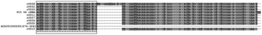 Sequence alignments of 5S rRNA genes of the three G. lamblia isolates.r0002, r0005, r0006, r0007, r0011, r0015, r0026, and r0008 represent the eight G. lamblia WB 5S rRNA genes. ACGJ01000259 (274–309) represents sequences from residue 274 to 309 of contig ACGJ01000259 in the G. lamblia GS genome. Box denotes the putative partial 5S rRNA gene identified in G. lamblia GS sharing 100% identity with 5′ fragment of 5S rRNA gene in G. lamblia WB and P15.