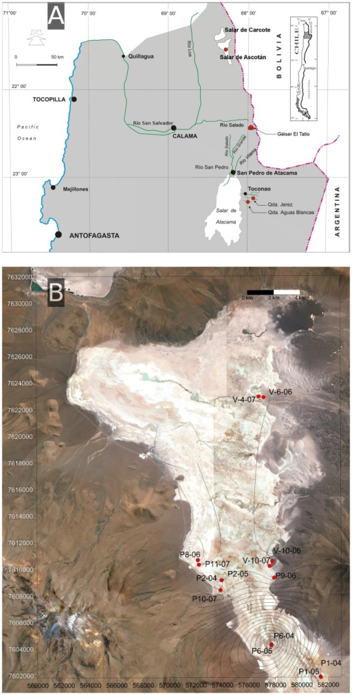 Maps of the sampling location.(A) Map of northern Chile showing the areas where samples were taken: 24 in Ascotán, three in El Tatio, and 2 in Atacama. (B) Modified satellite image of Salar de Ascotán showing the location of sampling spots. The contours of As level in water was constructed using the Surfer software program (v.7.0, Golden Software, USA). Point P6 had the highest concentration in the water. Concentrations in sediments were higher in all cases.
