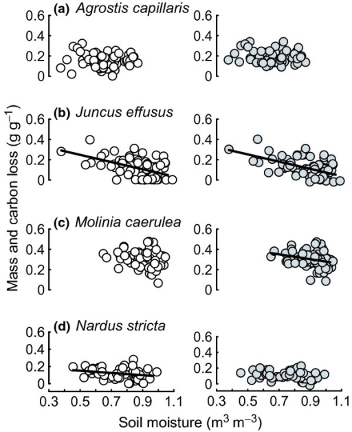 Plots of root decomposition against variation in soil moisture of plant species swards for all grazing treatments: (a) Agrostis capillaris; (b) Juncus effusus; (c) Molinia caerulea; (d) Nardus stricta. Root mass loss (g g−1), white circles; carbon loss (g g−1), grey circles. Significant linear mixed-effect model fits are shown for each species with a solid line.