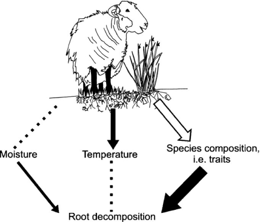 Conceptual diagram of the impact of livestock grazing on root decomposition, through grazing effects on soil microclimate (moisture and temperature) and species composition (i.e. root traits). Closed black arrows, significant direct effects (larger arrows indicate the increasing strength of that effect); dotted lines, measured nonsignificant direct effects; open arrow, unmeasured direct effects.