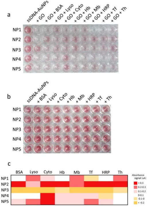 Corresponding color response matrix obtained from different sensor elements (NP1-NP5) toward the analytes. (a) Color changes of NP1-NP5 incubation with eight proteins (0.5 nM) and GO for 1 h. (b) Color changes of NP1-NP5 direct incubation without GO for the assay of eight proteins (c) Heat map derived from the absorbance signal responses of NP1-NP5 against 8 proteins after introduction of GO.