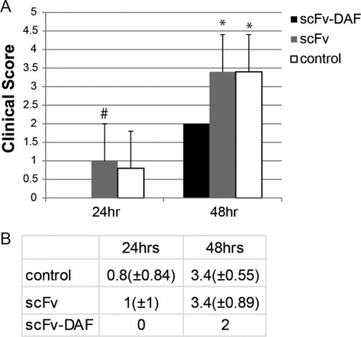 Clinical scores of EAMG-induced rats treated with scFv-35 (shaded bars), scFv-35-DAF (black bars), and PBS (white bars). (A) Rats were treated with scFv-35-DAF, scFv-35, or PBS control before being induced with MAb 3. The rats treated with scFv-35-DAF had no weakness at 24 h and minimal weakness at 48 h with vehicle-treated and scFv-35–treated rats (#P < 0.05 vs. scFv-35-DAF, *P < 0.01 vs. scFv-35-DAF). (B) Table of clinical scores for scFv-35, scFv-35-DAF, and PBS treatment at 24 h and 48 h.