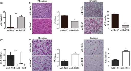 Effects of miR-106b on aggressive behavior of SUM1315-bo and MCF-7 cells in vitro. (a) miR-106b mimic increased miR-106b level in SUM1315-bo cells. (b) Transwell invasion (n = 3) and migration (n = 3) assays showed that SUM1315-bo cells transfected with miR-106b mimic (200 nM) decreased the invasive and migratory ability of the cells. Cells were counted after staining with crystal violet. Representative images are shown at left. Graphs indicate the average number of cells per field 24 h after transfection. Data represent the mean ± standard deviation (SD) of at least three independent experiments. *P < 0.05, **P < 0.01. Magnification in b–c, ×100. (c) Suppression of miR-106b by specific inhibitor in MCF-7 cells. Mature miR-106b was quantified using miRNA-specific real-time polymerase chain reaction (PCR) using U6 RNA for normalization. (d) Transwell invasion and migration assays on MCF-7 cells indicated that the downregulation of miR-106b increased the invasive and migratory ability of the cells. Data represent the mean ± SD of at least three independent experiments *P < 0.05, **P < 0.01.