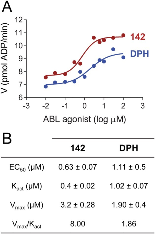 Concentration-dependent activation of the ABL kinase core protein by compound 142.The wild type ABL kinase core was assayed in the presence of compound 142 and DPH at the indicated concentrations using a kinetic kinase assay (see Materials and Methods). Reaction velocities are plotted as a function of compound concentrations. The resulting data were curve-fit to determine the EC50, Kact and Vmax for each activator as described under Materials and Methods. Each of these parameters was determined in triplicate, and the mean values ± SE are presented in the table below the graph. The table also provides the ratio Vmax/Kact as a measure of overall enhancement of catalytic efficiency in the presence of each of these two ABL agonists.