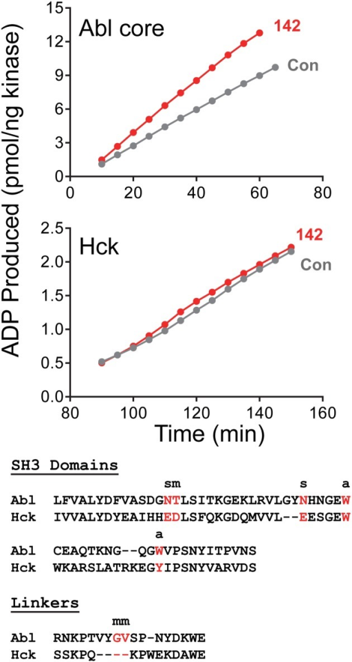 Compound 142 fails to activate downregulated HCK in vitro.Top panels: Recombinant, downregulated wild type ABL core and near full-length HCK proteins were assayed in the presence of compound 142 (1 μM) or with DMSO alone as control (Con) using a kinetic kinase assay (see Materials and Methods). Data are plotted as pmol ADP produced per ng kinase as a function of time. Bottom: Amino acid sequence alignment of the ABL and HCK SH3 domains and SH2-kinase linkers. SH3 and linker residues predicted to contribute to compound 142 binding are highlighted in red (see Fig 10). The type of interaction is indicated as side chain (s), main chain (m), or aromatic (a).