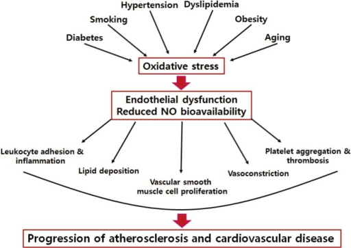 the characteristics of artherosclerosis coronary artery disease and endothelium Segmental coronary endothelial dysfunction in patients with minimal atherosclerosis is associated with necrotic core plaques  this study was designed to test the hypothesis that in patients with minimal coronary atherosclerosis, coronary artery segments with abnormal endothelial function have specific plaque characteristics  / segmental.