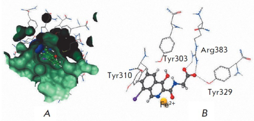 "Analysis of the active site of prolyl hydroxylase enzyme 2. A– active center occupied by ""native"" ligand.B – interaction between inhibitor and amino acid residues of theenzyme (docking solution)"