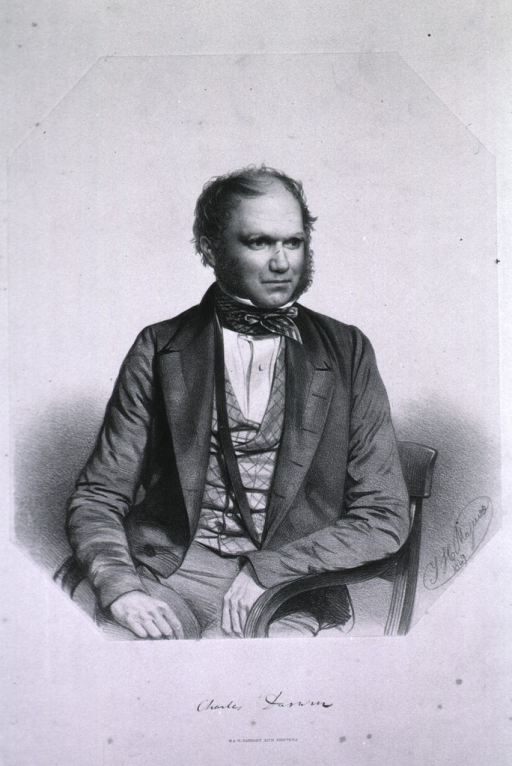 <p>Half-length, seated in a chair, front pose with head turned to the right.</p>