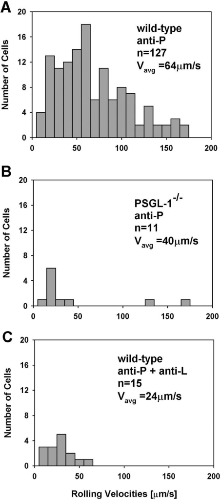 Leukocyte rolling velocity distribution in untreated cremaster muscle venules of (A) wild-type mice treated with P-selectin blocking mAb RB40.34 (anti-P), (B) PSGL-1−/− mice treated with anti-P, and (C) wild-type mice treated with anti-P and anti-L (L-selectin blocking F(ab′)2 of mAb MEL-14) >60 min after exteriorization. Rolling was completely blocked by adding L- and E-selectin mAb in panel A, or E-selectin mAb in panels B and C. Absolute cell numbers are shown for leukocyte velocity groups with bin sizes of 10 μm/s.