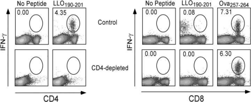 C57BL/6 mice acutely depleted of CD4+ cells do not mount a CD8+ T cell response to MHC class II–restricted peptides. C57BL/6 mice were depleted of CD4+ T cells by three injections of anti-CD4 mAb and infected with rLmOva. LLO190–201 and Ova257–264-specific CD4+ or CD8+ T cells were quantified by intracellular IFN-γ staining day 7 after infection and after in vitro stimulation with or without peptide. Numbers represent the percentage of Ag-specific cells in the CD4+ or CD8+ T cell population. This experiment is representative of two mice per group from two independent experiments.