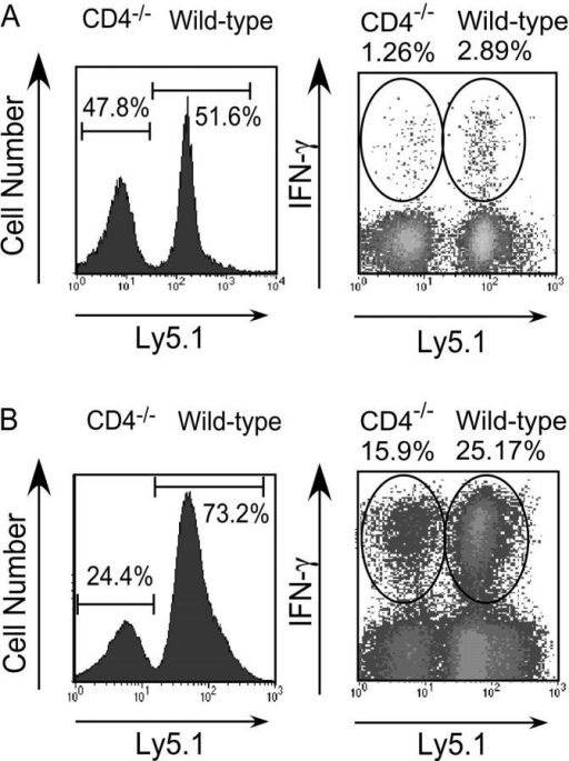 Wild-type CD8+ T cells respond better than CD4−/− CD8+ T cells even when immunized in the same host. MACS-sorted CD8+ cells from Ly5.1 B6 and Ly5.2 CD4−/− mice were mixed in a 1:1 ratio and injected into Thy 1.1 hosts, which were immunized 1 d later with rLmOva or LCMV. For the analysis, donor T cells were gated as CD8+Thy1.1− and assessed for CD4−/− (Ly5.1−) or wild-type (Ly5.1+) origin. (A) 7 d after rLmOva immunization, the fraction of donor CD8+ T cells making IFN-γ in response to Ova peptide was quantitated. Numbers show the average of five adoptive hosts. (B) 8 d after LCMV immunization, IFN-γ synthesis by donor CD8 cells after in vitro stimulation with H2-Db-restricted GP33–41 peptide was assessed. Data are representative of two independent experiments.