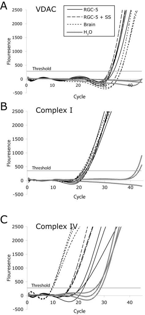 Quantitative Real-Time RT-PCR of Mitochondrial Components and Associated Proteins. Amplification curves for (A) VDAC, (B) Complex I, and (C) Complex IV. Solid black lines indicate undifferentiated RGC-5 cells, long dashes indicate differentiated RGC-5 cells, and short dashes indicate cerebral cells. The fuzzy line denotes the template-free control. The horizontal gray line indicates the calculated threshold value by which Ct is determined.