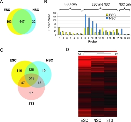 Cell-Type–Specific Recruitment Patterns of REST as Revealed by ChIP-chip(A) The Venn diagram shows the numbers of bound RE1s in ESC (yellow) and NSC (blue) as determined by ChIP-chip. An additional 253 sites were not occupied in either cell type.(B) Representative qPCR validation of ESC-specific, NSC-specific, and shared sites.(C) Comparison of REST-occupied sites in NIH3T3, ESC, and NSC.(D) Hierarchical clustering of 564 commonly occupied RE1 from (C). Red scale reflects relative enrichment at each RE1.