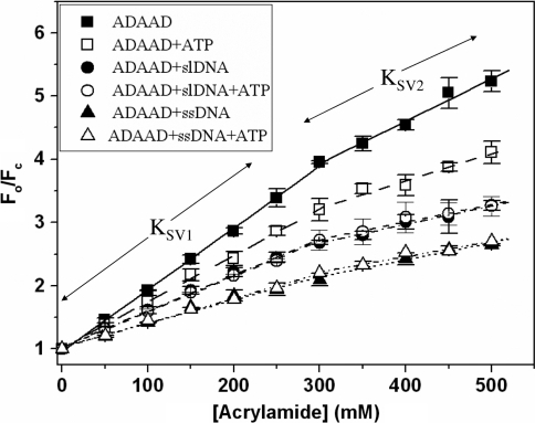 Stern–Volmer plots. ADAAD was titrated with acrylamide in absence and presence of ATP and DNA. (Filled square) protein alone; (open square) in presence of saturating concentration of ATP; (filled circle) in presence of saturating concentration of slDNA; (open circle) in presence of saturating concentrations of slDNA and ATP; (filled triangle) in presence of ssDNA; and (open triangle) in presence of saturating concentration of ssDNA and ATP.