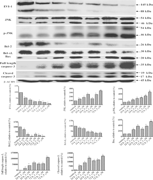 Changes in the protein expression levels of EVI-1, JNK, p-JNK, Bcl-2, Bcl-xL, Bax, full-length caspase-3 and cleaved caspase-3 in the THP1 cell line treated with ATO at various concentrations. Representative western blot results are shown. Results are expressed as the mean ± standard deviation (n=3). *P<0.01, vs. control group. EVI-1, ecotropic viral integration site-1; JNK, c-Jun N-terminal kinase; p-JNK, phosphorylated JNK; Bcl-2, B-cell lymphoma 2; Bcl-xL, B-cell lymphoma-extra large; ATO, arsenic trioxide.