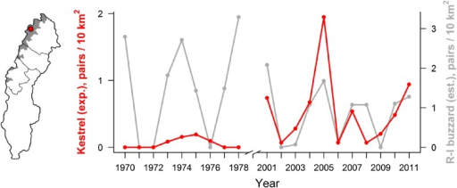 Density of breeding pairs of common kestrel and rough-legged buzzard in Stora Sjöfallet National Park 1970–1978 and 2001–2011. Density estimates include breeders only, i.e., nests where egg clutches were initiated. Both species are rodent specialists at this site, and short-term variation in breeding density is largely explained by numerical responses to small mammal fluctuations. Thus, the density of breeding pairs during rodent peaks is the most reliable population estimate. The rough-legged buzzard declined in Sweden in 1980–2000 (Kjellén and Roos 2000). In Stora Sjöfallet National Park, the average rough-legged buzzard breeding density in rodent peak years was lower in 2001–2011 compared to that in 1970–1978 (this figure)