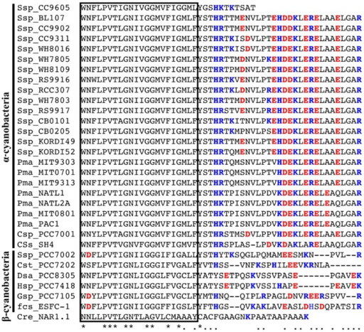 Alignment of the amino acid sequences of the C-terminal region of the cyanobacterial NitM proteins and the NAR1 protein from Chlamydomonas reinhardtii. Positively and negatively charged amino acid residues are indicated by blue and red characters, respectively. The Box indicates the sixth predicted transmembrane region. The source organisms are same as Figure 1. Asterisks indicate the amino acid residues common to all the NitM protein sequences. Dots indicate the amino acid residues common to all the α-cyanobacterial NitM proteins but the one from Synechococcus sp. strain CC9605. Dashes indicate gaps introduced to enhance the alignment.
