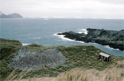 Photograph showing the weighbridge location.The terrain around the colony is such that there is only one route penguins can take both on their approach to the colony and on their return to the sea.