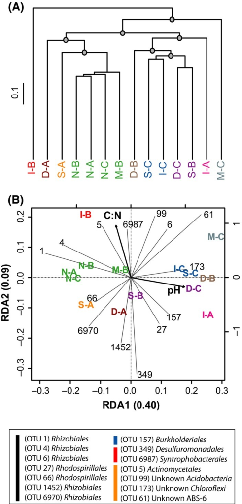 Comparison of soil samples according to their 16S rRNA gene profile. (A) UPGMA agglomerative clustering of soil samples derived from a matrix of Euclidean distance calculated after Hellinger transformation of OTU (97% identity threshold) absolute abundance. The grey circles denote the nodes delineating the four groups of samples significantly discriminated by SIMPROF permutation procedure (P < 0.05). The scale bar represents the Euclidean distance in the dendrogram. Colour labels show the assignation of the soil samples to their multifunctional class (red; class I, green; class II, blue; class II and black; class IV). (B) Parsimonious RDA triplot of Hellinger‐transformed OTU absolute frequency matrix explained by soil pH and C:N ratio. Only the 14 OTUs displaying extreme distribution in the reduced space are depicted for clarity. These OTUs are identified in the legend with colour bars discriminating α‐Proteobacteria (black), β‐Proteobacteria (blue), δ‐Proteobacteria (red) and other phyla (orange), as determined using the Greengene reference database V13_8_99 (McDonald et al., 2012). The colour labels used to present soil samples in the RDA triplot correspond to the clusters identified in the UPGMA (Fig. 4A). The sample M‐A is absent due the low yield of the DNA extraction procedure for this soil (see the Material and Methods section for more details).