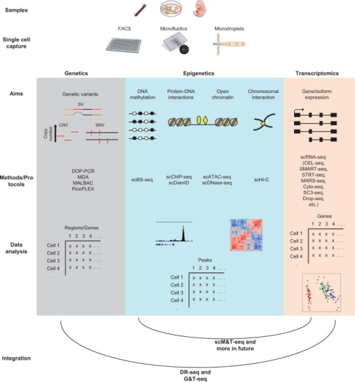 The current workflow of single-cell genomic methods in genetics, epigenetics and transcriptomics, and emerging combined multi-omic technologies from the same single cell. A typical workflow starts with single cell capture through either traditional FACS, microfluidics capture or microdroplets. Then DNA or RNA is prepared for sequencing by different protocols based on the aims of the study and the area of interest (genetics, epigenetics or transcriptomics). Computational analyses are used later on to extract interesting biological information. Recent emerging technologies allow combined genetics-transcriptomics and epigenetics-transcriptomics investigation from the same cell.