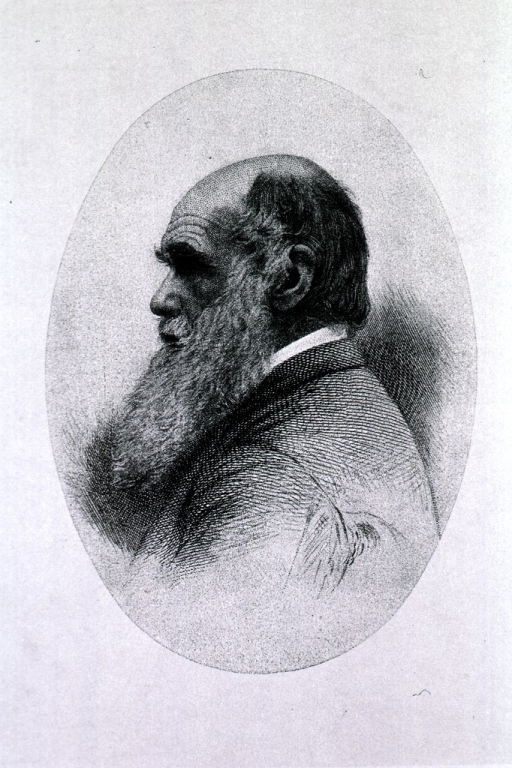 <p>Head and shoulders, left profile; as an old man.</p>