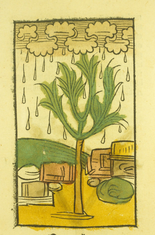 <p>Hand-colored woodcut of the manna tree. Clouds send droplets of rain onto the tree.</p>