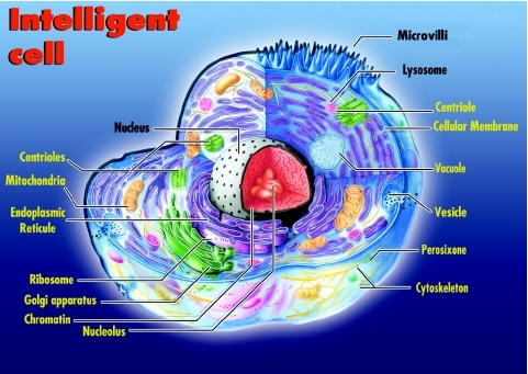 Intelligent cell. The intricate sub-cellular organization denotes the existence of a cellular intelligence. Thus, Systemic Theory recognizes the cell as an Intelligent Living System.