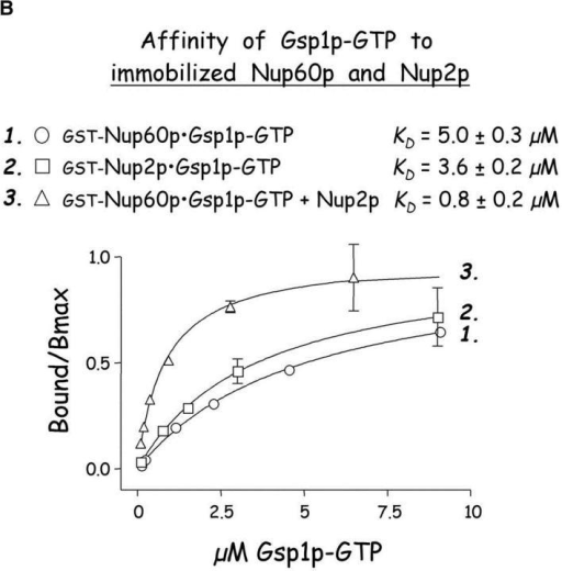 Nup60p binds Gsp1p–GTP and Prp20p, and functions as a Gsp1p GDI. (A) Nup60p binds Gsp1p–GTP. GST-Nup60p (1 μg) was immobilized on beads and incubated with His-Gsp1p (2 μg) preloaded with GTP or GDP. After 1 h at 4°C, bound and unbound proteins were resolved by SDS-PAGE and visualized with Coomassie blue. Note that Nup60p binds Gsp1p–GTP, but not Gsp1p–GDP. (B) Affinity of Gsp1p–GTP to Nup60p, Nup2p, and Nup60p–Nup2p complexes. GST–Nup-coated beads were incubated with various concentrations of His-Gsp1p–[γ-32P]GTP for 2 h at 4°C in binding buffer with 10 mg/ml BSA and protease inhibitors. The concentrations of GST–Nup60p and GST–Nup2p within beads were 800 nM and 1.5 μM, respectively. The dissociation constants (KD) of the Nup2p–Gsp1p–GTP complex and the Nup60p–Gsp1p–GTP complex in the presence and absence of 500 nM Nup2p were calculated as described in Materials and methods. Results were plotted as a fraction of maximal Gsp1p–GTP bound versus Gsp1p–GTP concentration. Each data point was performed in duplicate and the error bars represent SEM. Note that Nup60p and Nup2p cooperate to bind Gsp1p–GTP. (C) Nup60p inhibits the Prp20p-stimulated release of GTP from Gsp1p. His-Gsp1p–[γ-32P]GTP immobilized on nickel-coated agarose beads (15 nM Gsp1p–GTP within the beads) was incubated with 0.9 nM Prp20p and 1 mM GDP, plus 4 μM GST–Nup60p (aa 188–539), Yrb1p, Nup2p, Kap95p, or GST. GST–Nup60p (aa 188–539) (indicated by asterisk) was used instead of full-length Nup60p due to its superior solubility and protease resistance. After 10 min, Prp20p activity was stopped with ice-cold buffer, beads were washed, and the [γ-32P]GTP that remained bound to the beads was quantified by scintillation counting. Each data point was performed in duplicate and error bars represent SEM. Note that Nup60p reduces (but does not abolish) the activity of Prp20p. (D) Nup60p binds Prp20p. GST–Nup60p (1 μg) was immobilized on beads and incubated with purified Prp20p (1 μg) in the presence or absence of DNAse I and RNAse I (1 U and 1 μg, respectively). After 1 h at 4°C, unbound and bound proteins were resolved by SDS-PAGE and visualized with Coomassie blue staining. Note that purified Prp20p binds Nup60p.