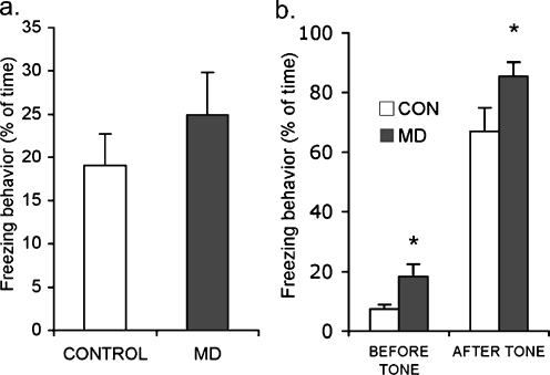 Effects of MD on fear conditioning. a MD does not affect the amount of freezing behaviour in response to the context (p = 0.35). b During cued fear conditioning, MD animals (n = 10) show increased freezing in response to the novel environment (p = 0.002) and an increased freezing behaviour in response to the tone when compared to controls (both groups, n = 10, p < 0.05)