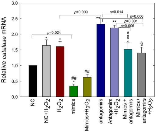Antagomirs of miR-30b protect ARPE-19 cells from miR-30b mimics-mediated inhibition of catalase expression under oxidative condition.Cells were transfected with NC (20 nM), mimics (20 nM), antagomirs (50 nM), or mimics+antagomirs, and incubated for 24 h before harvesting for total RNA extraction; H2O2 (200 uM) was added for the last 18 h. Catalase mRNA levels were expressed relative to Hprt mRNA with the value of the scrambled miRNA-transfected control (NC) set to 1. Values are presented as mean ± SEM; n = 4. *p<0.05 vs. control (NC), **p<0.001 vs. NC/mimics/mimics+H2O2/mimics+antagomirs+H2O2, §p<0.001 vs. mimics/mimics+H2O2, # p<0.05 vs. antagomirs, ## p<0.001 vs. H2O2/NC+ H2O2.