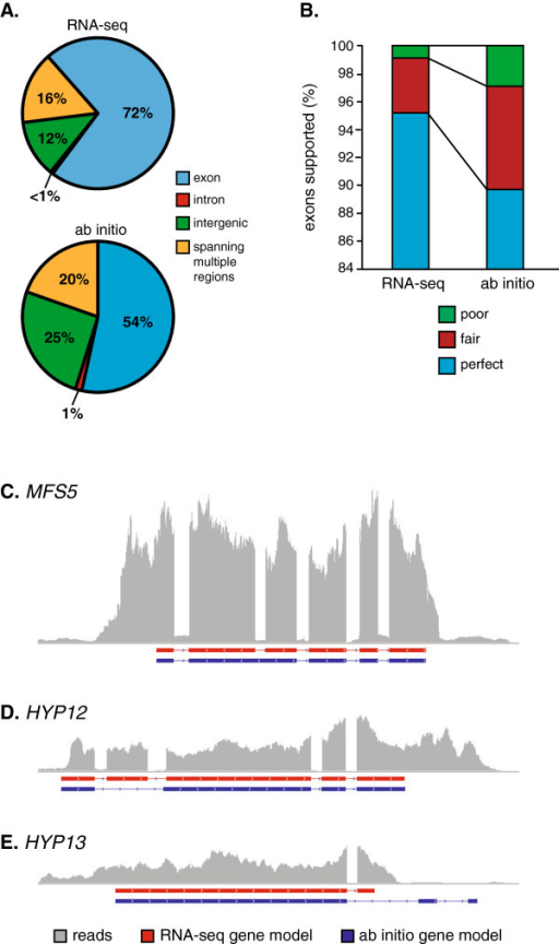 Comparison of RNA-seq-derived gene models with Histoplasma ab initio gene predictions. The accuracy of the RNA-seq-derived and ab initio gene models for G186A were measured as the frequency of mRNA reads that match the modeled gene structures (A), the percentage of exon structures with mRNA experimental support (B), and direct sequencing of mRNAs (C-E). (A) Percentages indicate the number of cDNA library reads that match to exons (blue), introns (red), intergenic regions (green), or spanning multiple regions (yellow) in the RNA-seq-derived or ab initio gene set models. (B) Accuracy of the exon definition is indicated by the percentage of exons with perfect support (blue; at least 99% of the exon length is covered by mRNA reads), fair support (red; 70% to 99% of the exon length is covered by mRNA reads), or poor support (green; less than 70% of the exon length is covered by mRNA reads). (C-E) Schematics of gene structures are shown as exons (horizontal boxes below the x-axis) for RNA-seq-derived models (red) and the ab initio predictions (blue). The horizontal represents the genome sequence in that interval. Vertical histogram (grey bars) depicts the frequency of mRNA reads that match that particular region of the genome sequence. Models are depicted for the MFS5 gene (C) that encodes an MFS-family transporter, the HYP12 gene (D) and the HYP13 gene (E), two genes encoding factors of unknown function.