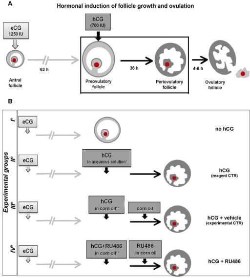 Flowchart describing the experimental plan and workflow for sample...