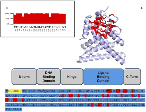 Schematic representation of the structural domains of ER protein.A) A cartoon representation of the three-dimensional structure of the ligand binding domain is shown, as well as its sequence. Residues belonging to the ligand binding pocket are shown in red in both the structure and sequence. Residues highlighted in yellow belong to the histidine tag, residues in light blue encompass the ligand binding domain. B) Degree of conservation for residues of the ligand binding pocket among the analyzed ER sequences. Full bars correspond to 100% conservation.