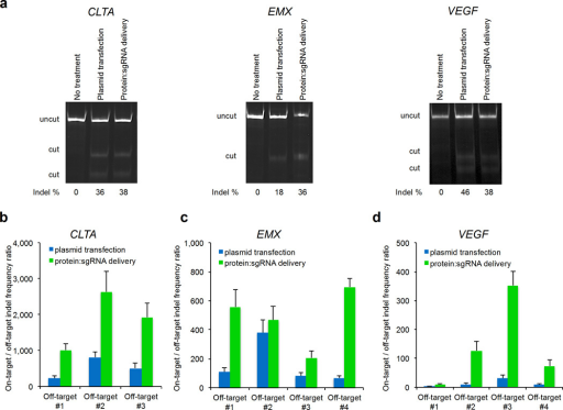 DNA sequence specificity of Cas9-mediated endogenous gene cleavage in cultured human cells by plasmid transfection or by cationic lipid-mediated protein:sgRNA delivery using 1.6 µL RNAiMAX complexed with 100 nM Cas9 and 100 nM sgRNA. (a) T7EI assay was performed for on-target modification of endogenous CLTA, EMX, and VEGF genes in HEK293T cells. (b–d) On-target:off-target DNA modification ratio resulting from Cas9:sgRNA for plasmid transfection or cationic lipid-mediated protein:sgRNA delivery. The conditions for each treatment were adjusted to result in ~10% on-target cleavage, enabling a comparison of DNA cleavage specificity between the two delivery methods under conditions in which on-target gene modification efficiencies are similar. P values for a single biological replicate are listed in Supplementary Table 2. Each on- and off-target sample was sequenced once with > 10,000 sequences analyzed per on-target sample and an average of > 111,000 sequences analyzed per off-target sample (Supplementary Table 2). All protein:sgRNA deliveries and plasmid transfections were performed in 24-well format using 1.6 µL RNAiMAX in 550 µL DMEM-FBS without antibiotics. Error bars reflect s.d. from three biological replicates performed on different days.