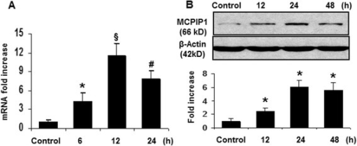 Minocycline-treatment-induced MCPIP1 in the brain. (A) MCPIP1 mRNA expression in mouse brain by minocycline treatment as measured by qRT-PCR. Values represent mean ± SD, *P < 0.05, #P < 0.01, §P < 0.001 versus control. (B) MCPIP1 protein levels in mouse brain by minocycline treatment as measured by Western blot. Results are representative of three independent experiments. *P < 0.05 versus control. Values represent mean ± SD. MCPIP1, monocyte chemotactic protein-induced protein 1; qRT-PCR, quantitative real-time PCR.