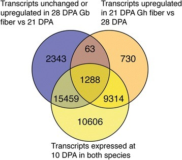Venn diagram implicating transcripts that may contribute to the extended elongation period of Gb fibers. The three transcript sets compared were: (1) upregulated or unchanged from 21 to 28 DPA in Gb fibers; (2) downregulated from 21 to 28 DPA in Gh fibers; and (3) expressed in both genotypes at 10 DPA during early high-rate elongation. The 1,288 transcripts held in common may support the continued elongation of Gb fiber