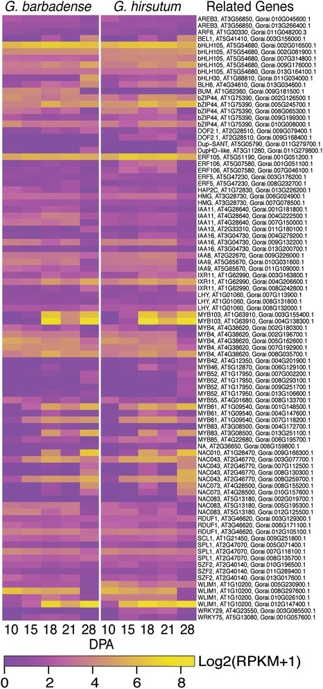 Expression patterns of genes encoding secondary wall related transcription factors in Gb and Gh fibers. The heat map parameters are explained in the legend of Fig. 6