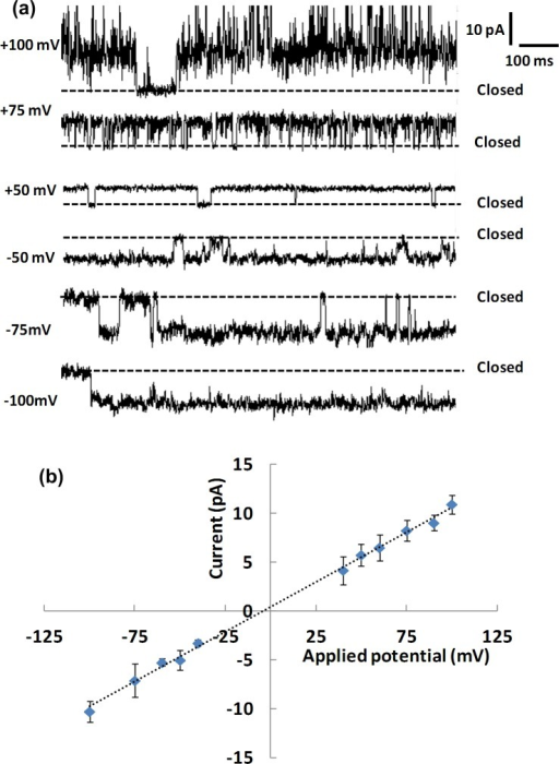 Ion channel events and their current voltage relationship.(a) Representative single channel current traces for the NavSp pore at different applied transmembrane potentials. (b) I-V plot for the NavSp pore. Error bars are one standard deviation for ≥ 3 individual bilayer measurements. The electrophysiology buffer is 0.5 M NaCl, 10 mM HEPES, pH 7.4. Channels were introduced in the aperture-suspended bilayer of POPE:POPG (1:1) by fusion of proteoliposomes with a lipid-to-protein ratio of 300:1. Data were recorded at a sampling frequency of 1.25 MHz and were low pass-filtered at 1.25 kHz.