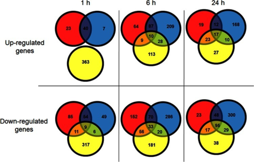 Comparison of genes differentially expressed over the course of the experiment. The numbers indicate the number of up- or downregulated genes. Red circles, NaCl-exposed samples; blue circles, KCl-exposed samples; yellow circles, glycerol-exposed samples.