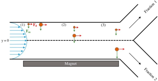 Illustration of the proposed experimental setup and the force balances experienced by two differently sized magnetic nanoparticles as they flow through the system. Green arrows represent the magnetic force (FM) and red arrows represent the drag force (FD). At position (1), the two MNPs are introduced to magnetic field in flow at the wall opposite the magnet. At a later time, the two particles reach position (2) and have separated from each other in the y-direction due to the increased magnetic force experienced by the larger MNP. Upon reaching the end of the channel at position (3), the larger of the two particles has traversed past the midline of the channel (y = 0) and will therefore be collected in Fraction 2. The smaller particle remains above y = 0 and will be collected in Fraction 1.