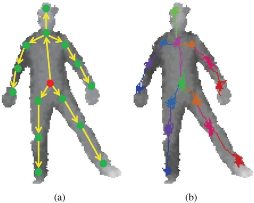 The adjacent joint positions can be used as the starting positions for new RTW.(a) illustrates the kinematic tree implemented along with RTW. First, the random walk toward belly positions starts from body center. The belly positions (red dot in (a)) become starting point for hips and chest, and so forth. (b) shows the RTW path examples.