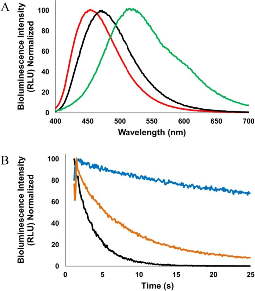 Emission wavelengths and bioluminescence half-lives of selected aequorin variants.(A) Bioluminescence emission spectra of aequorin with L-4-aminophenylalanine at position 86 with coelenterazine cp (red), aequorin with native coelenterazine (black), and L-4-methoxyphenylalanine at position 82 and 86 with coelenterazine i (green), illustrating the range of emission wavelengths in this study. (B) Half-life bioluminescence decay of aequorin with native coelenterazine (black), L-4-methoxyphenylalanine with coelenterazine n (orange), and L-4-iodophenylalanine with coelenterazine i (blue), illustrating the range of emission half-lives in this study. Reprinted from [47] under a CC BY license, with permission from Open Access Dissertations, original copyright 2015.