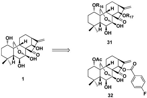 The 1- or/and 14-position modified oridonin derivatives (31 and 32) with antibacterial activity.