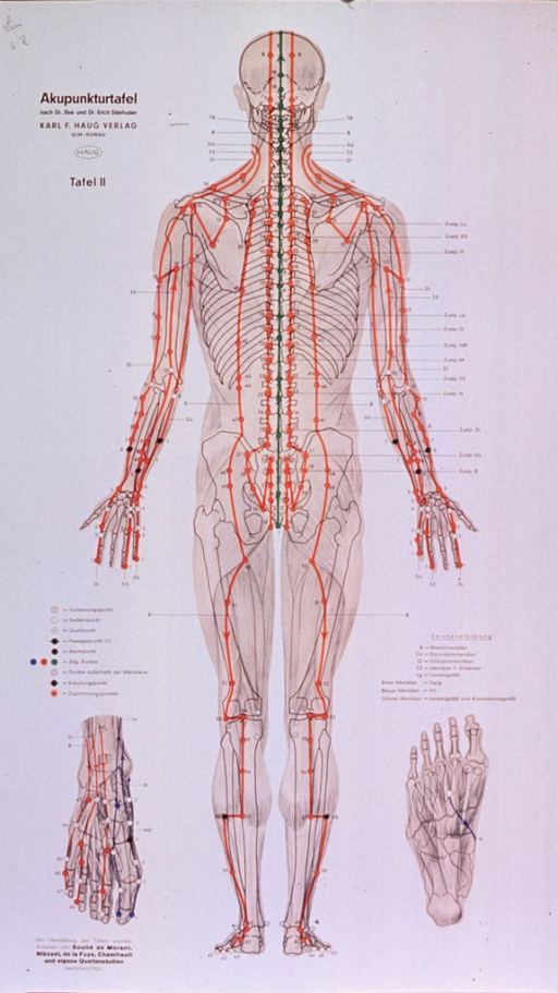 <p>Anatomical chart.</p>