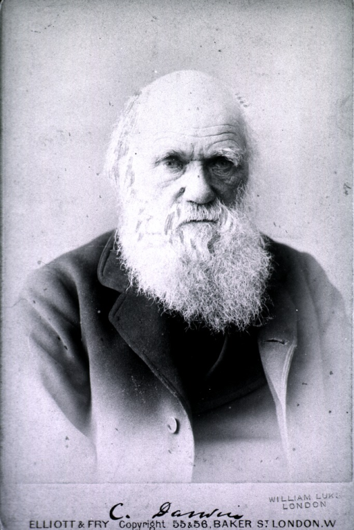 <p>Head and shoulders, full face; as an old man, wearing an overcoat.</p>