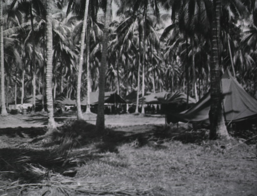 <p>Several open-air tents are shown pitched amidst tall palm trees.</p>